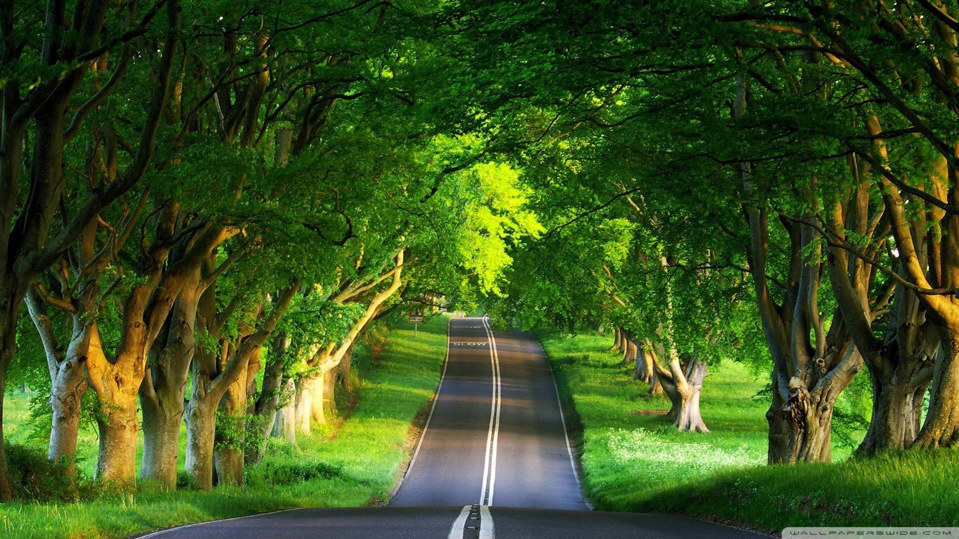 nature wallpaper hd,natural landscape,green,nature,tree,natural environment