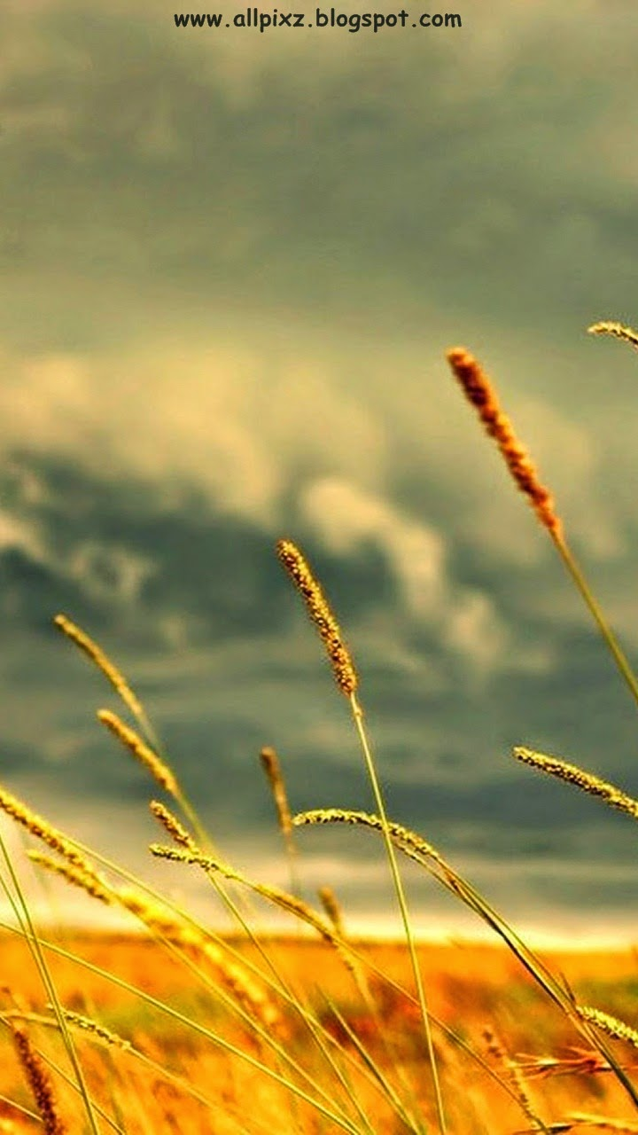 hd wallpapers for mobile,nature,sky,grass,grass family,water