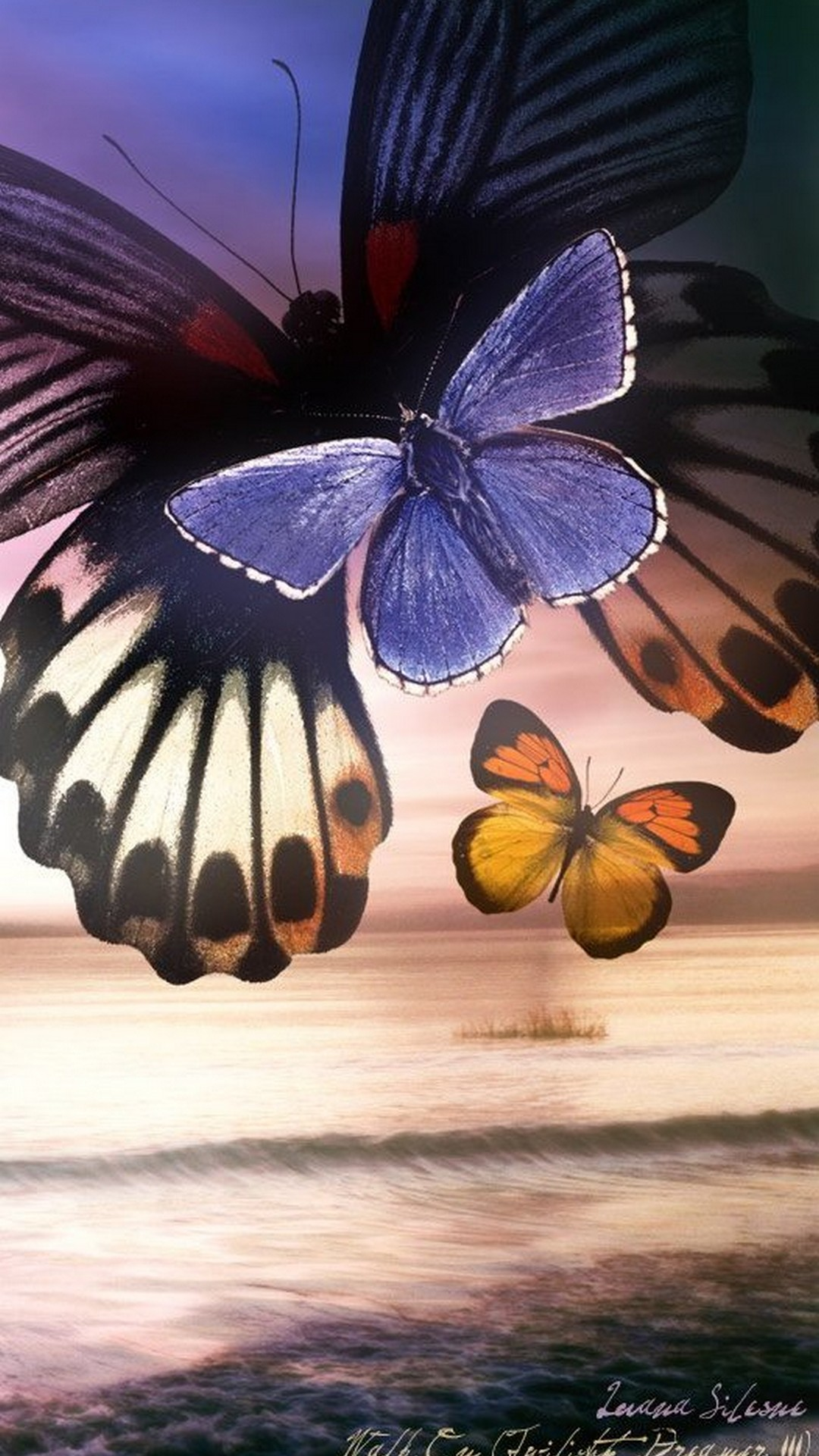 hd wallpapers for mobile,moths and butterflies,butterfly,insect,invertebrate,pollinator