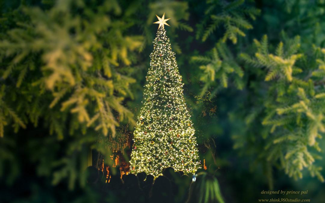 christmas wallpaper,tree,balsam fir,oregon pine,vegetation,colorado spruce