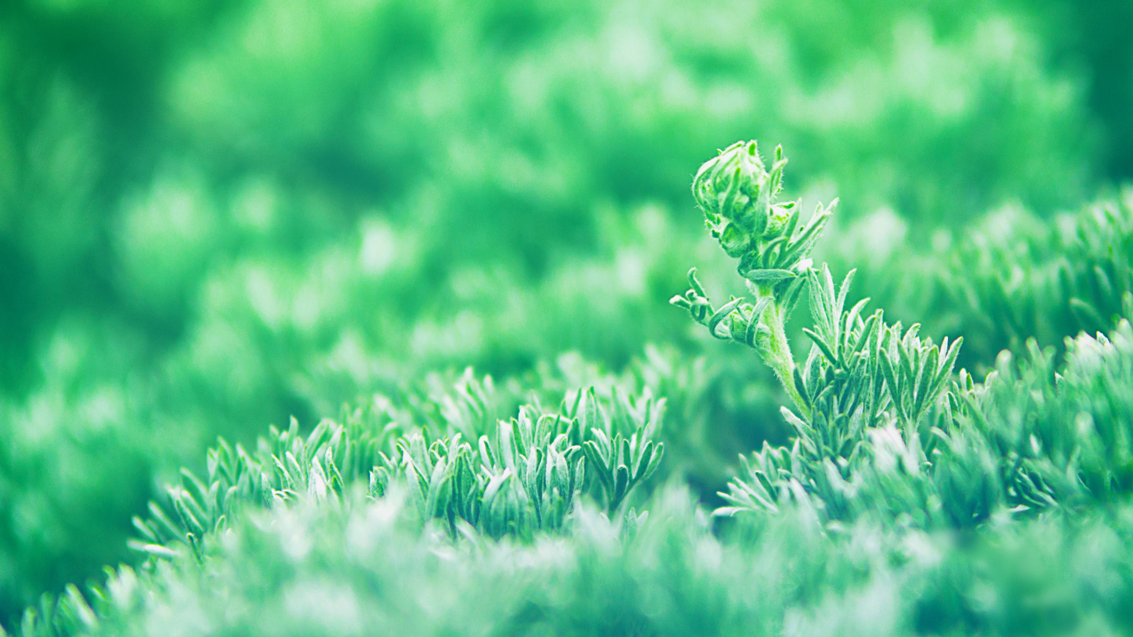 nature wallpaper,green,nature,grass,vegetation,natural landscape