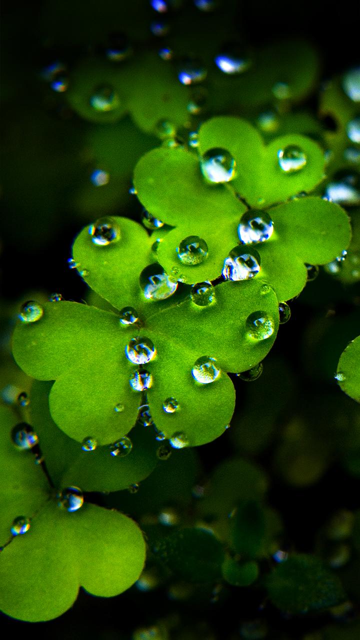 wallpaper for mobile,dew,green,moisture,water,leaf