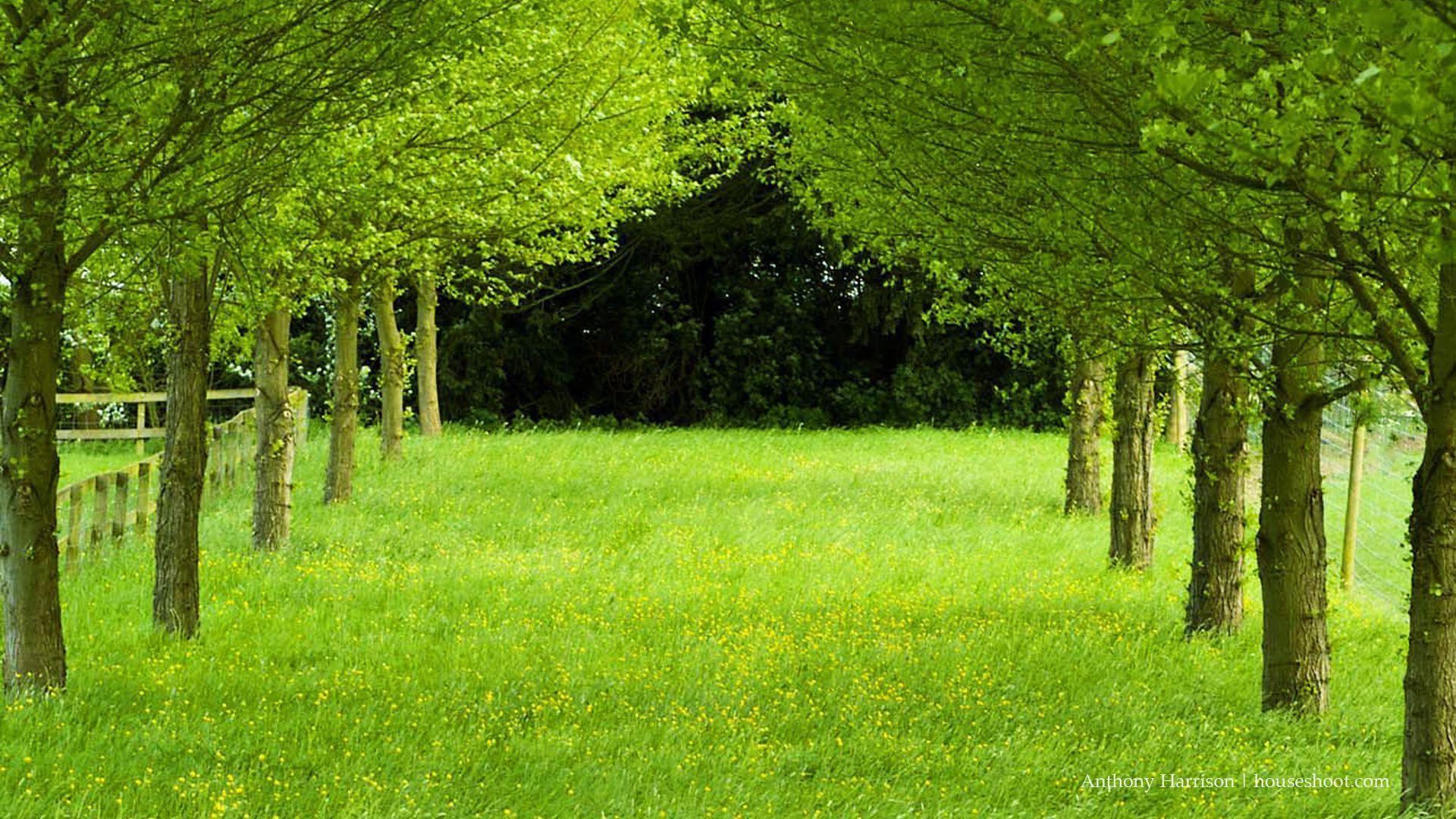 wallpaper hd,natural landscape,green,tree,nature,natural environment