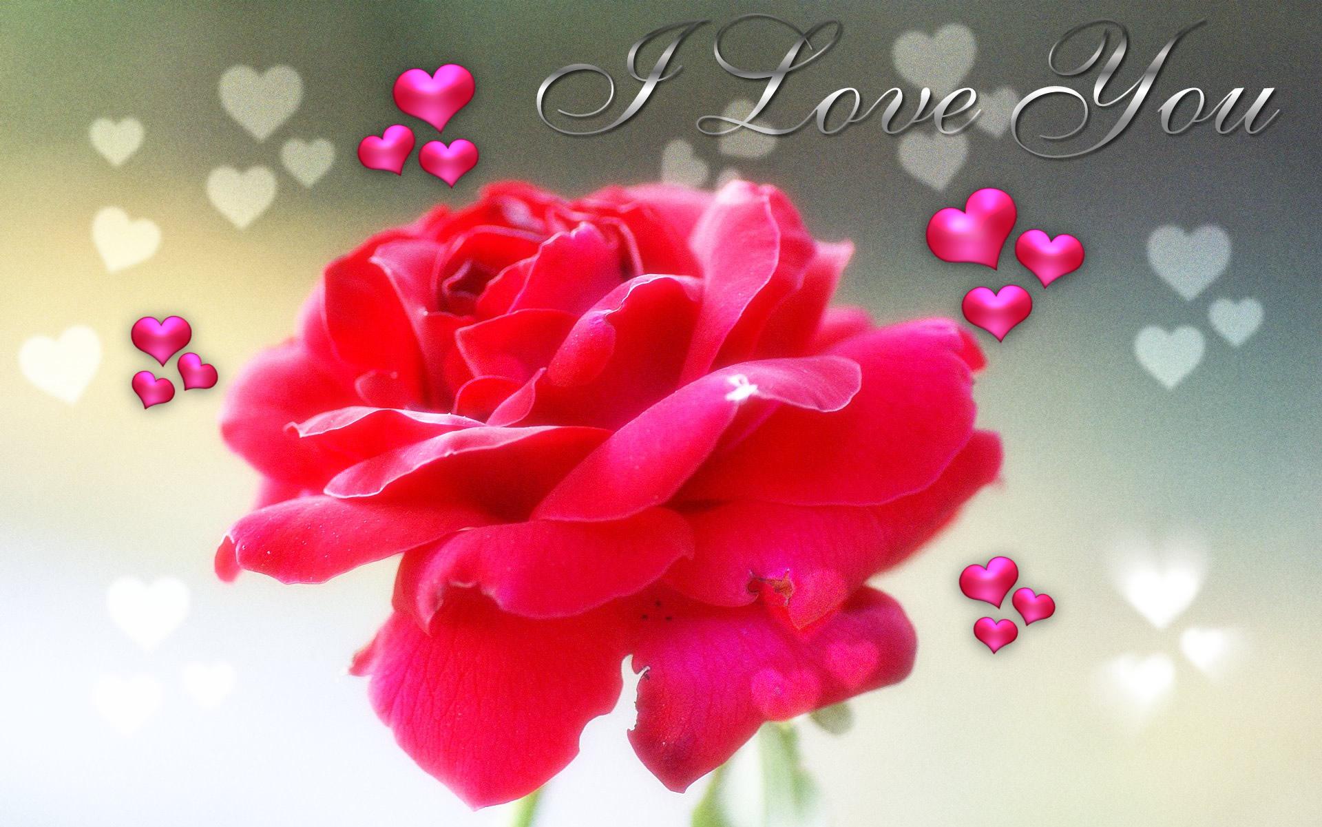 wallpaper download hd love,petal,pink,red,flower,valentine's day