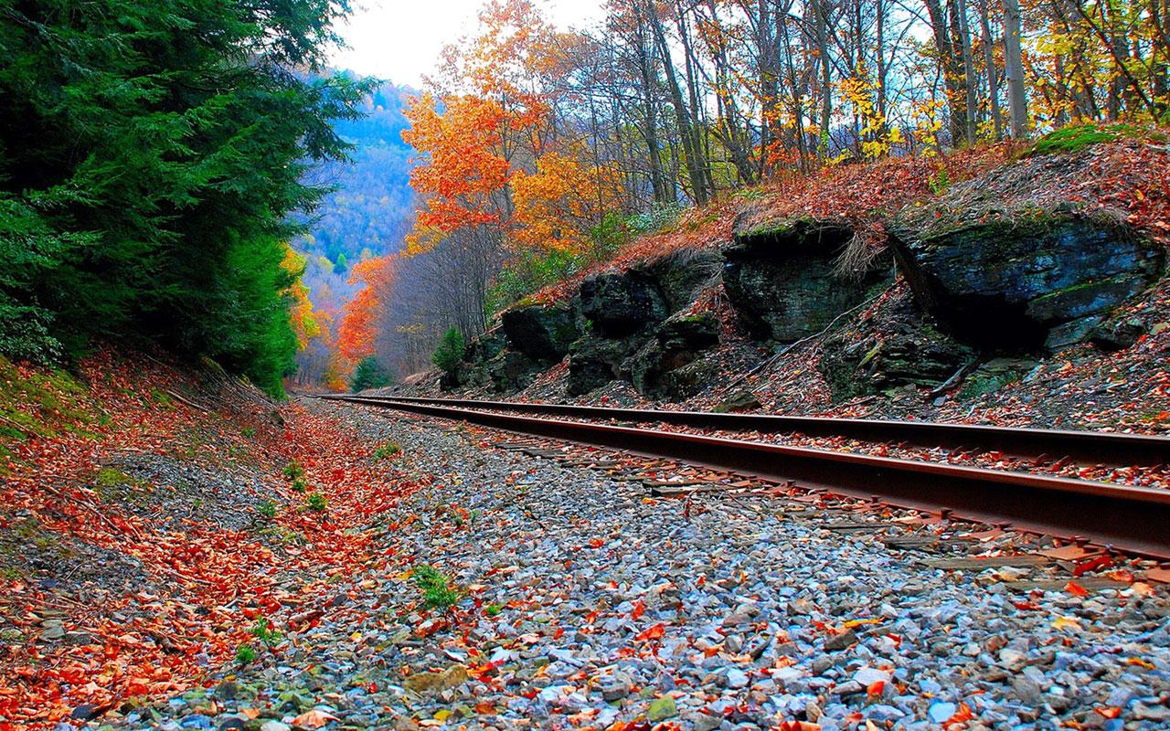 romantic wallpaper hd,leaf,nature,tree,autumn,transport