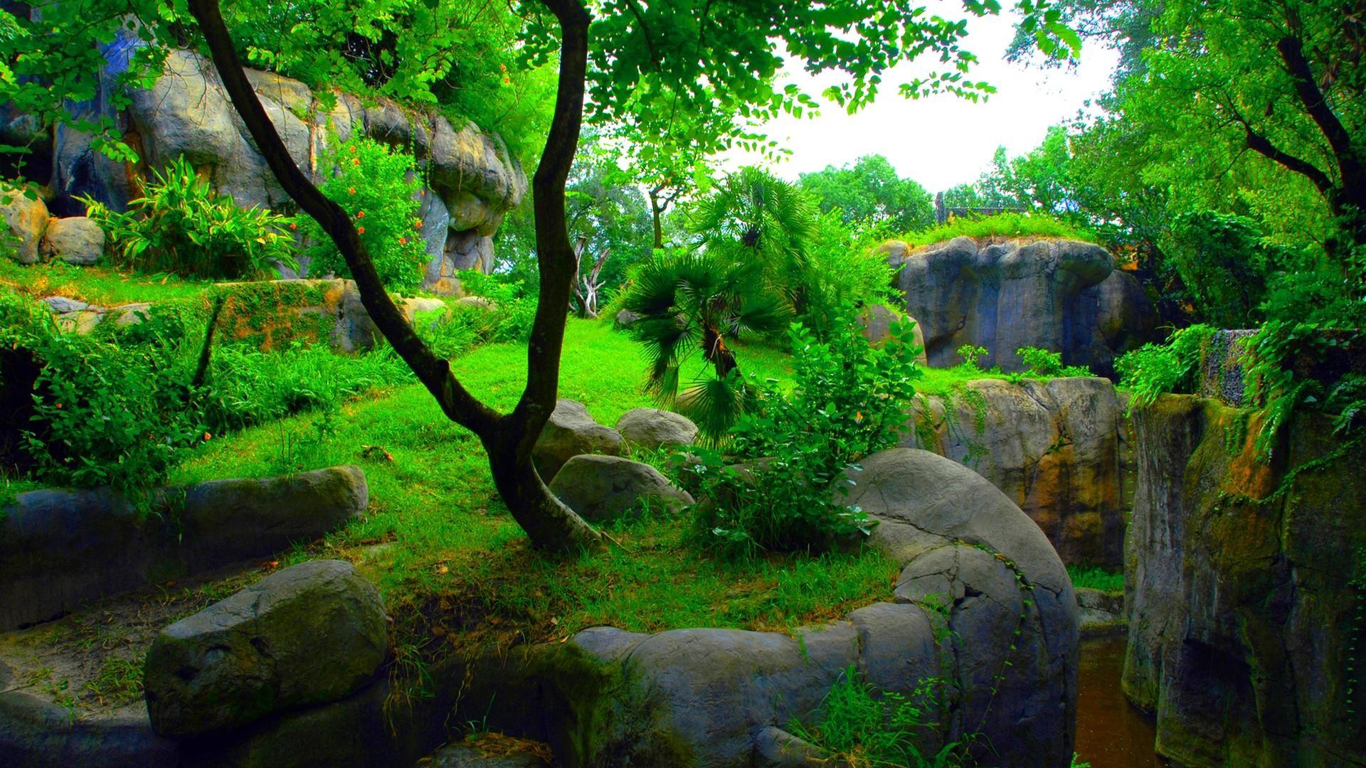 nature wallpaper hd 3d,nature,natural landscape,vegetation,tree,green