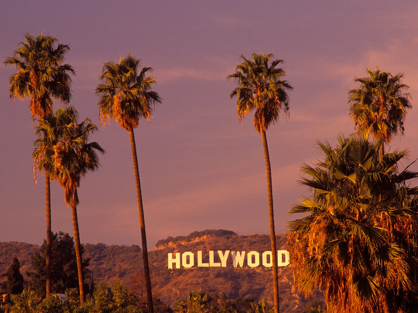 hollywood wallpaper,tree,sky,nature,palm tree,arecales (#101940) -  WallpaperUse