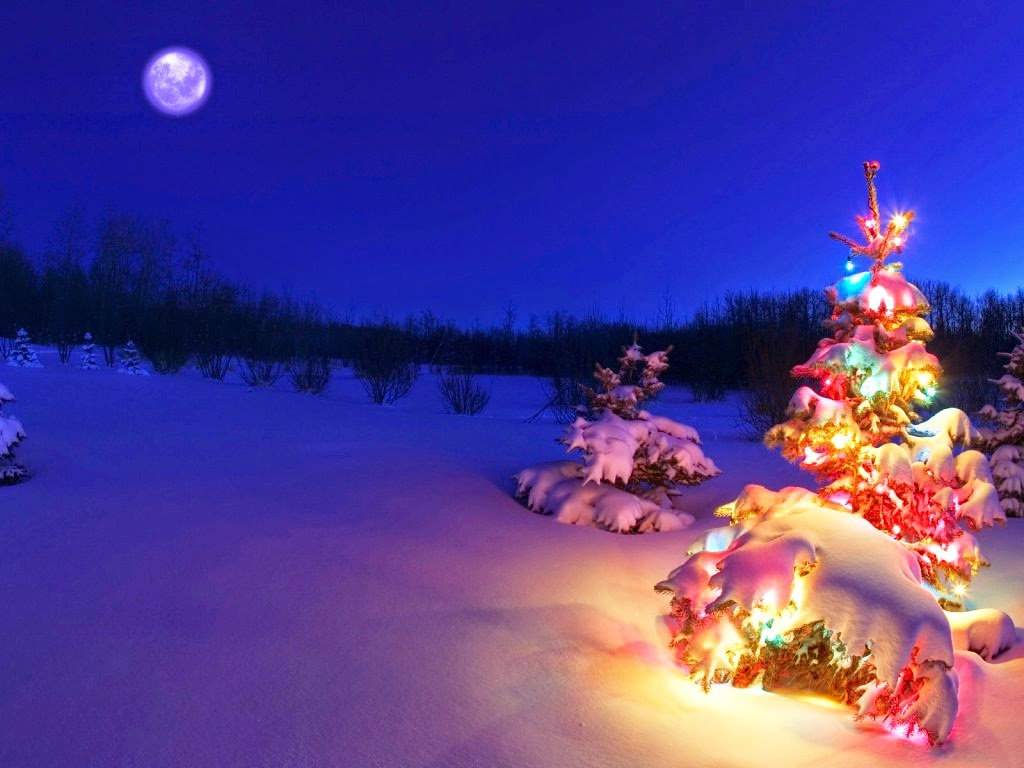 animated christmas wallpaper,christmas tree,nature,christmas decoration,light,winter