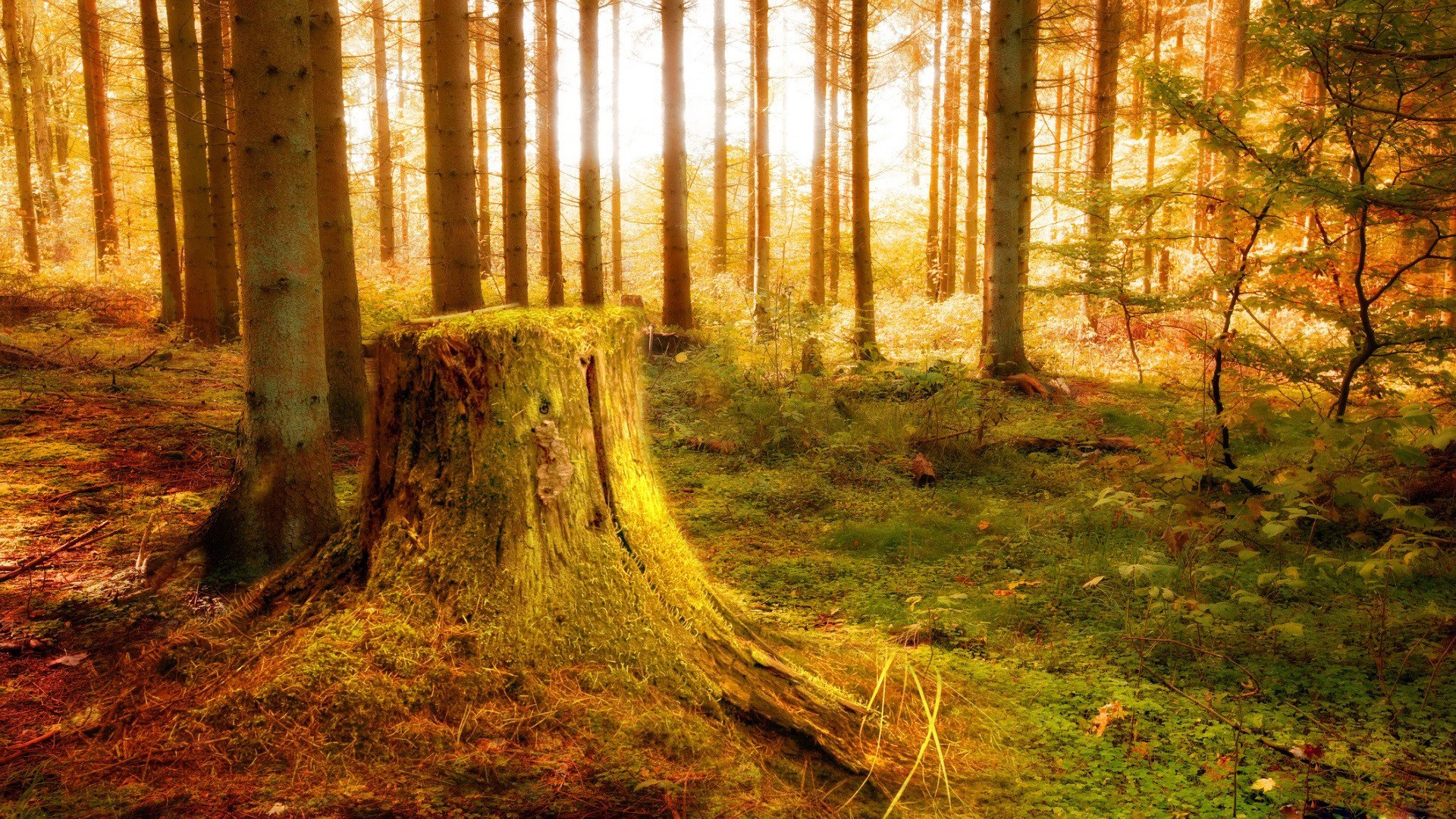nature wallpapers hd free download,tree,natural landscape,nature,people in nature,forest