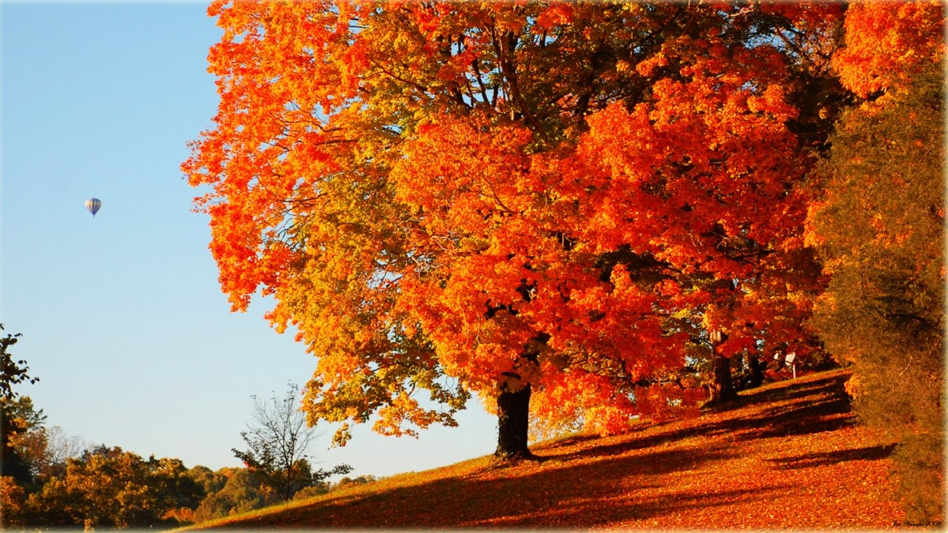 free fall wallpaper,tree,leaf,autumn,red,sky