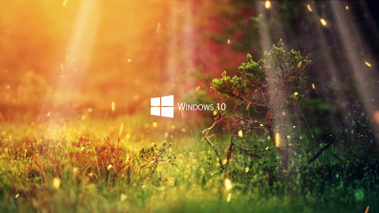 windows 10 hd wallpapers 1080p,nature,green,vegetation,grass,sunlight