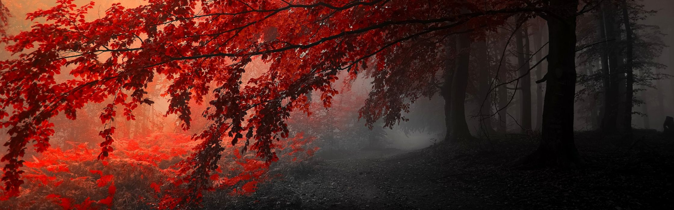 two monitor wallpaper,nature,tree,red,leaf,atmospheric phenomenon