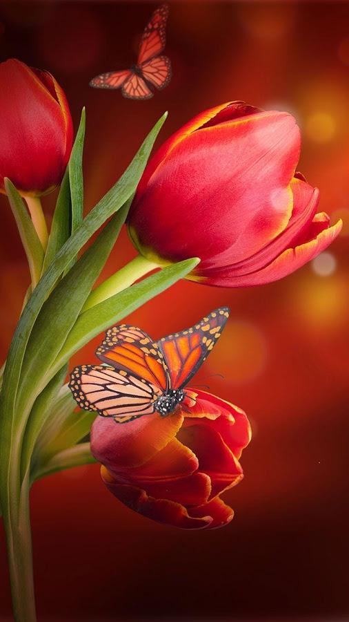 3d flower live wallpaper,butterfly,nature,red,petal,still life photography