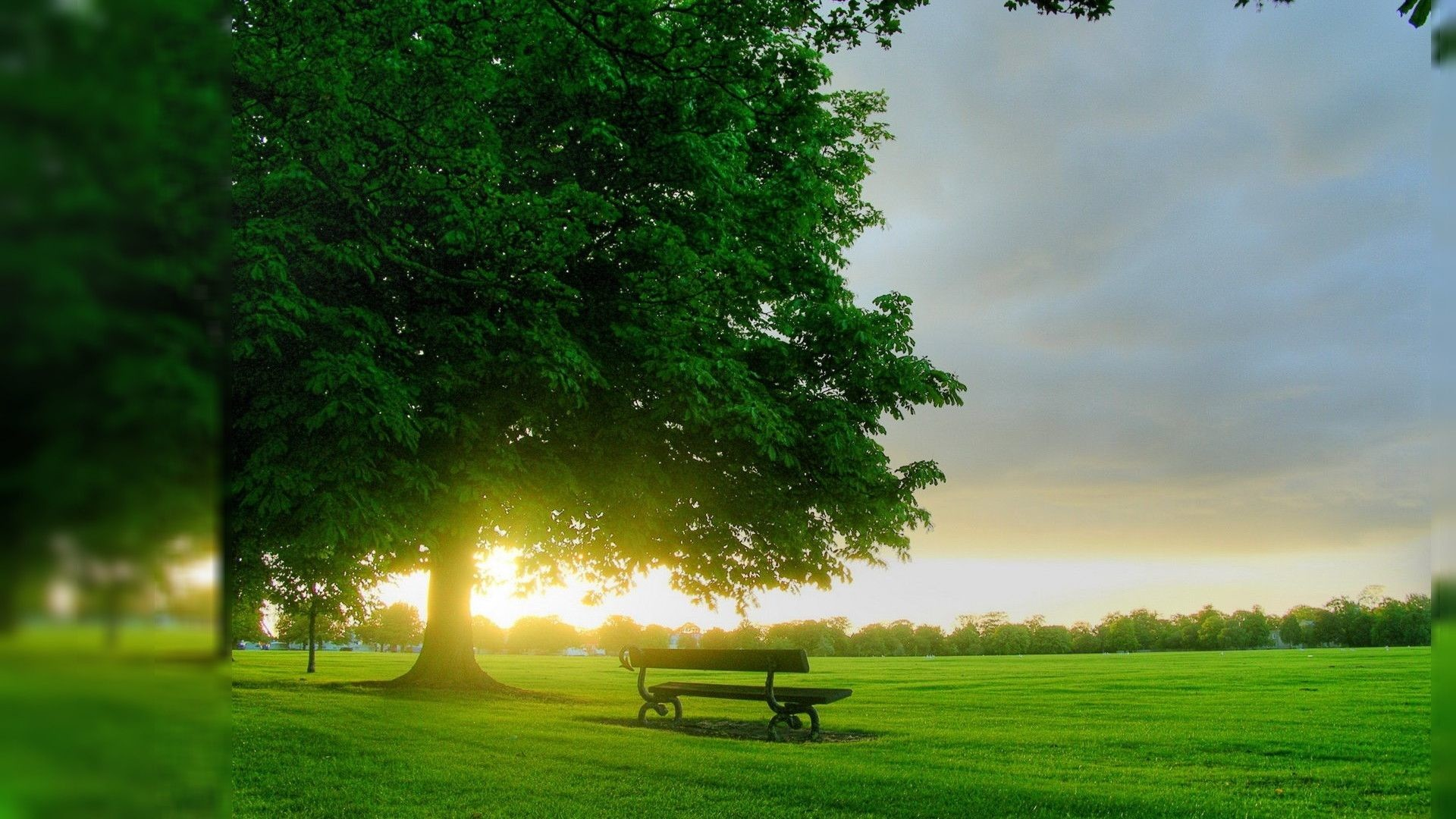 nice wallpapers for mobile,green,natural landscape,nature,sky,bench