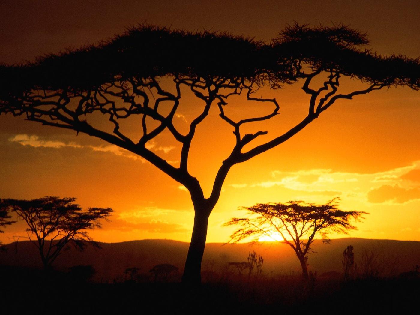 africa wallpaper,natural landscape,sky,nature,savanna,tree