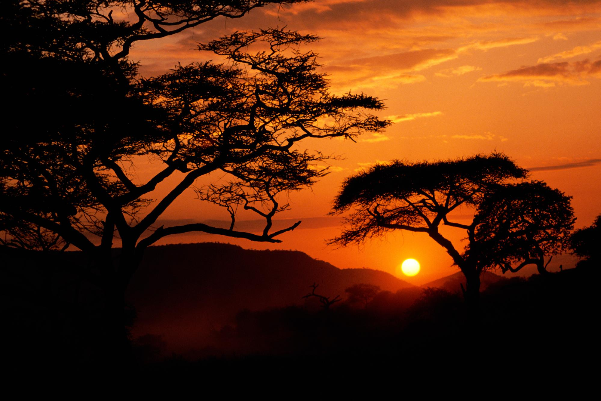 africa wallpaper,sky,nature,sunset,tree,sunrise