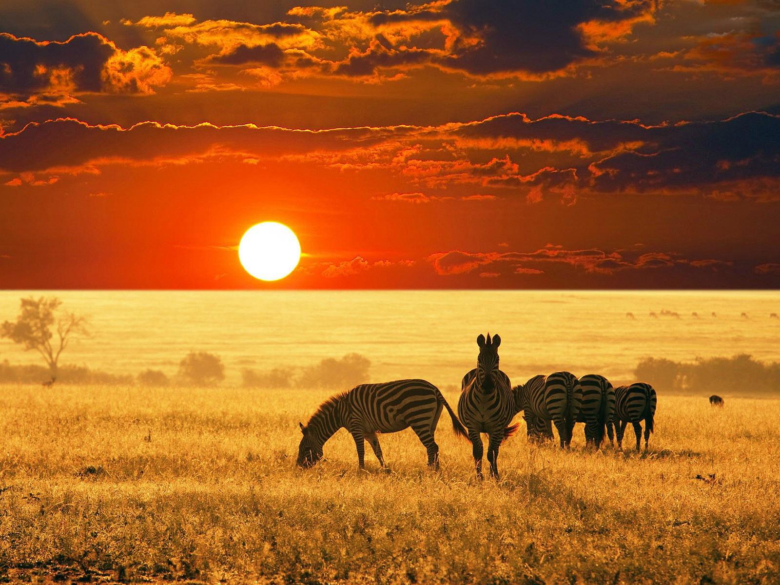 africa wallpaper,wildlife,savanna,grassland,sky,natural environment