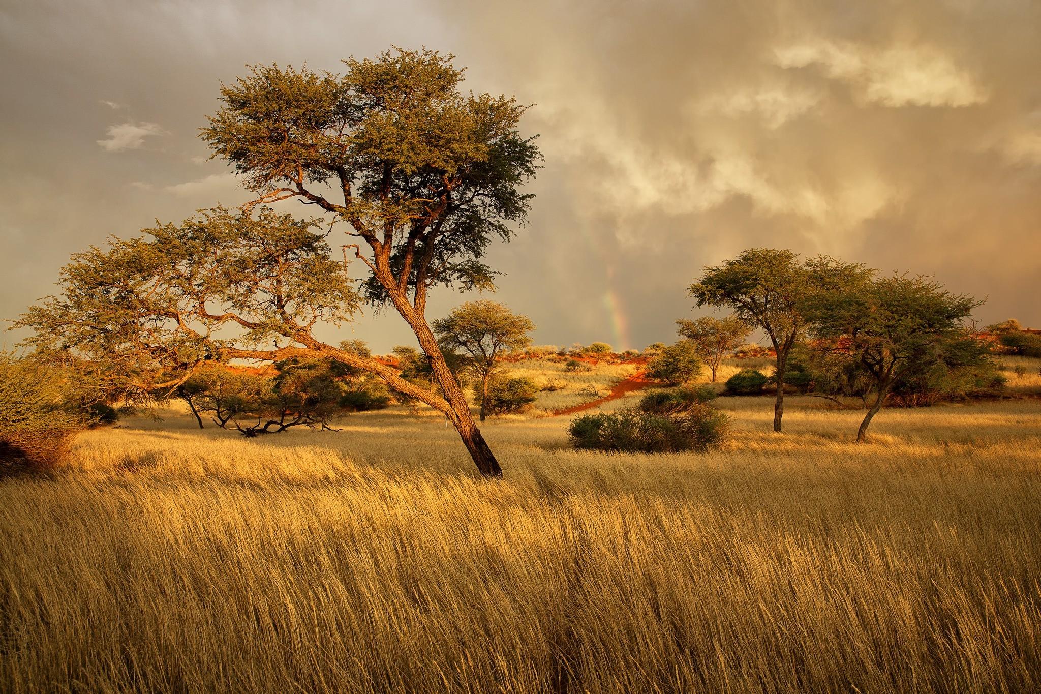 africa wallpaper,natural landscape,nature,savanna,natural environment,tree