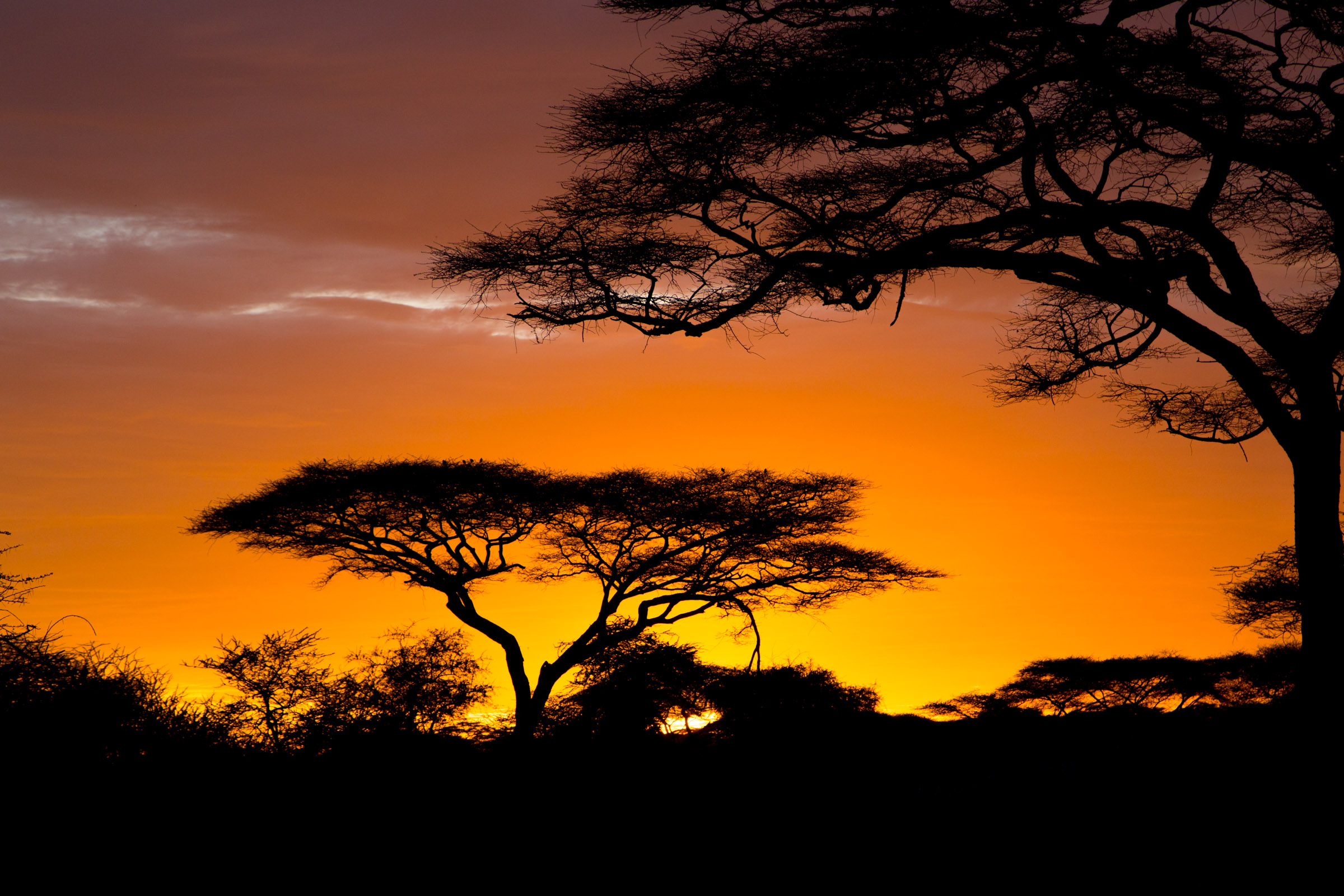 africa wallpaper,sky,nature,tree,sunset,natural landscape
