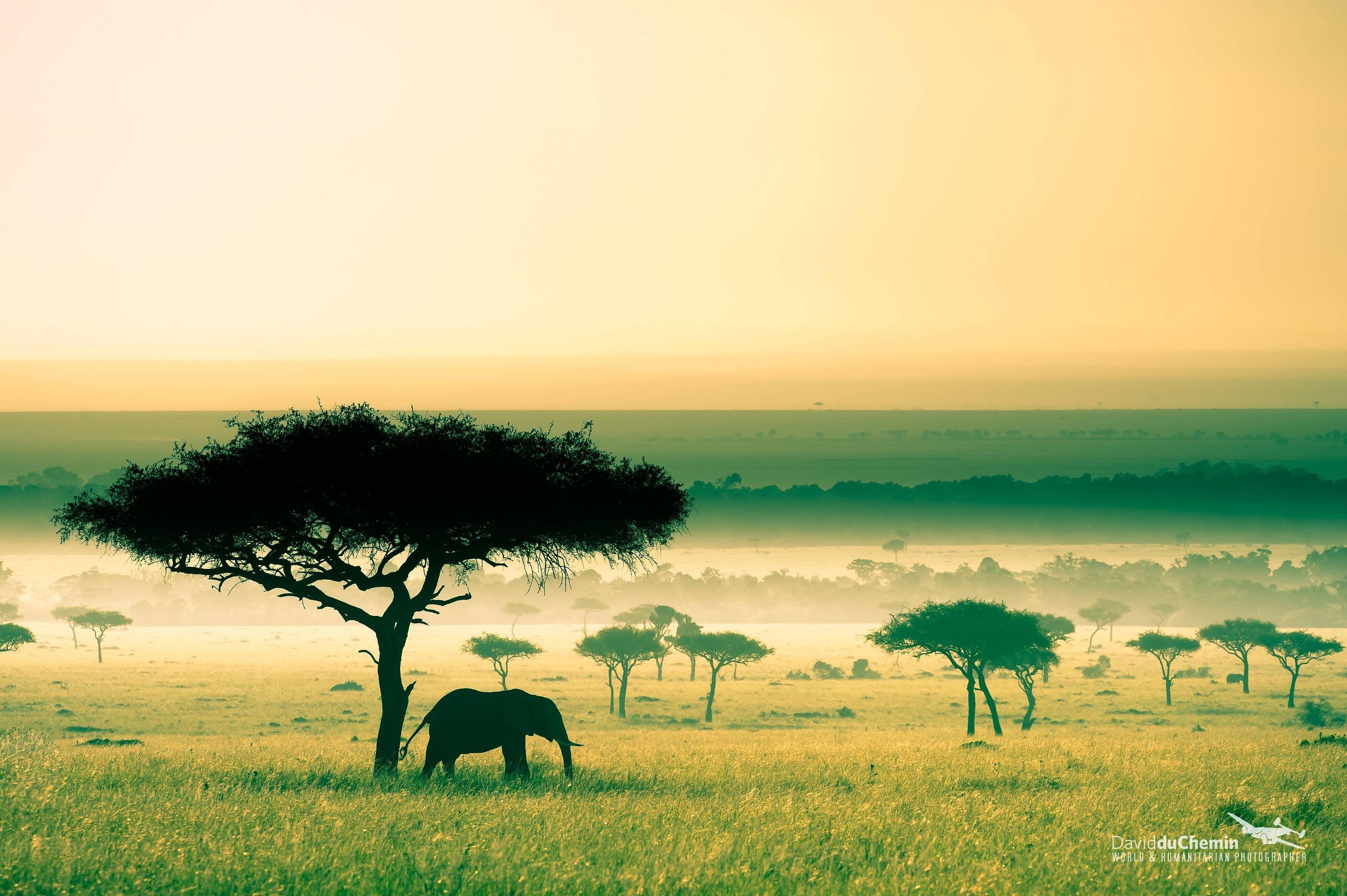 africa wallpaper,savanna,natural landscape,grassland,sky,wildlife