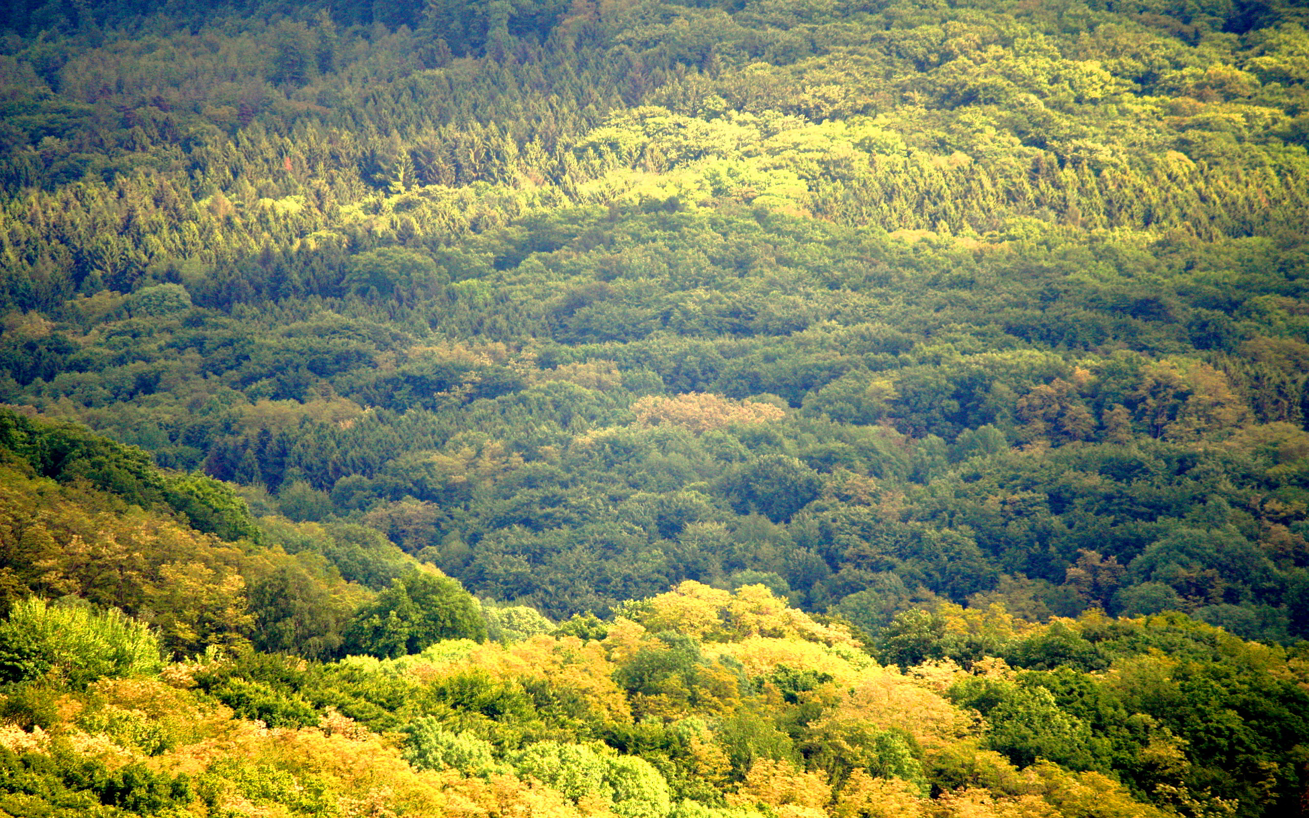 thick wallpaper,vegetation,natural landscape,nature,tropical and subtropical coniferous forests,natural environment