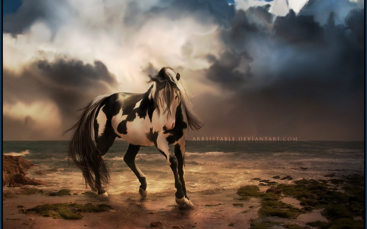 unusual wallpaper,horse,sky,mane,mustang horse,stallion
