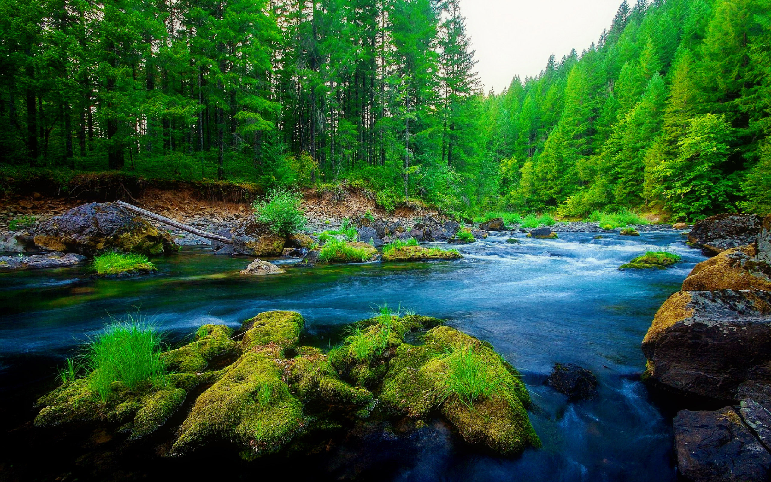 green forest wallpaper hd,body of water,nature,natural landscape,water resources,river