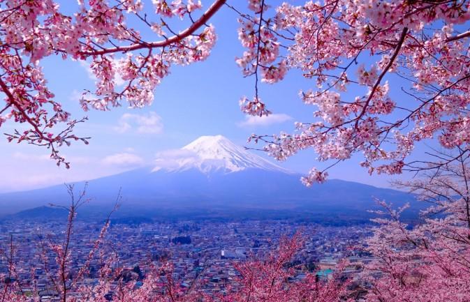 flower theme wallpaper,nature,tree,blossom,flower,cherry blossom