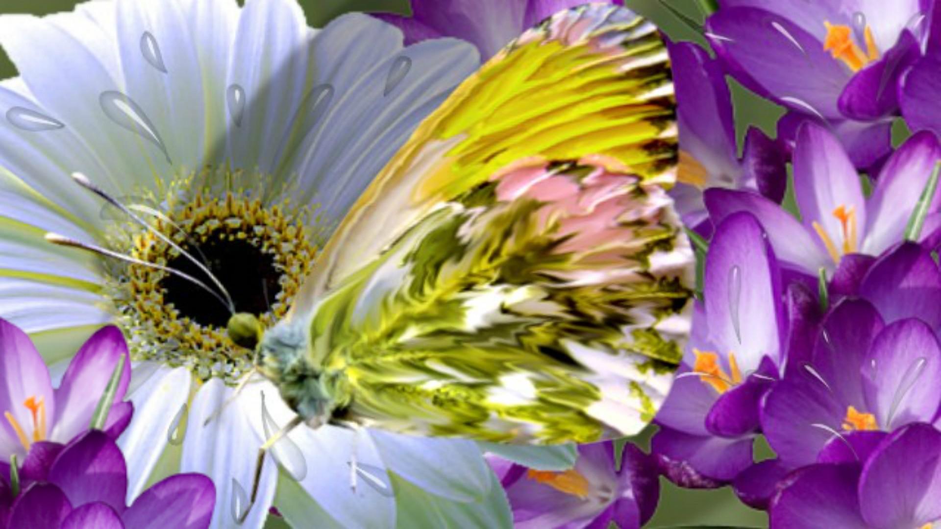 nature wallpaper full hd,flower,petal,purple,cut flowers,plant