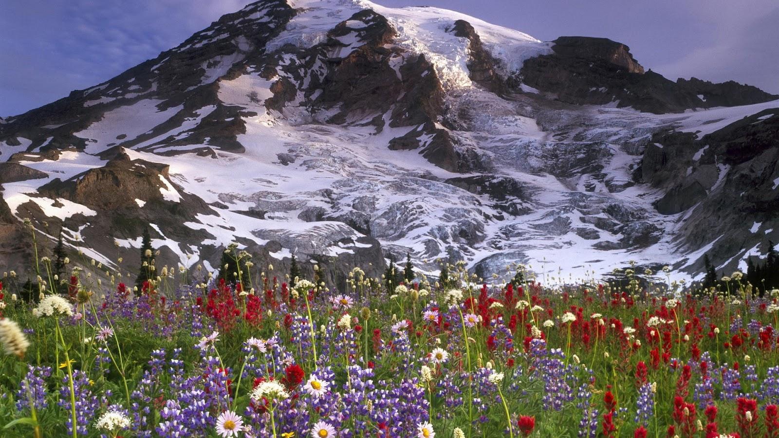 nature wallpaper full hd,mountainous landforms,natural landscape,nature,mountain,meadow