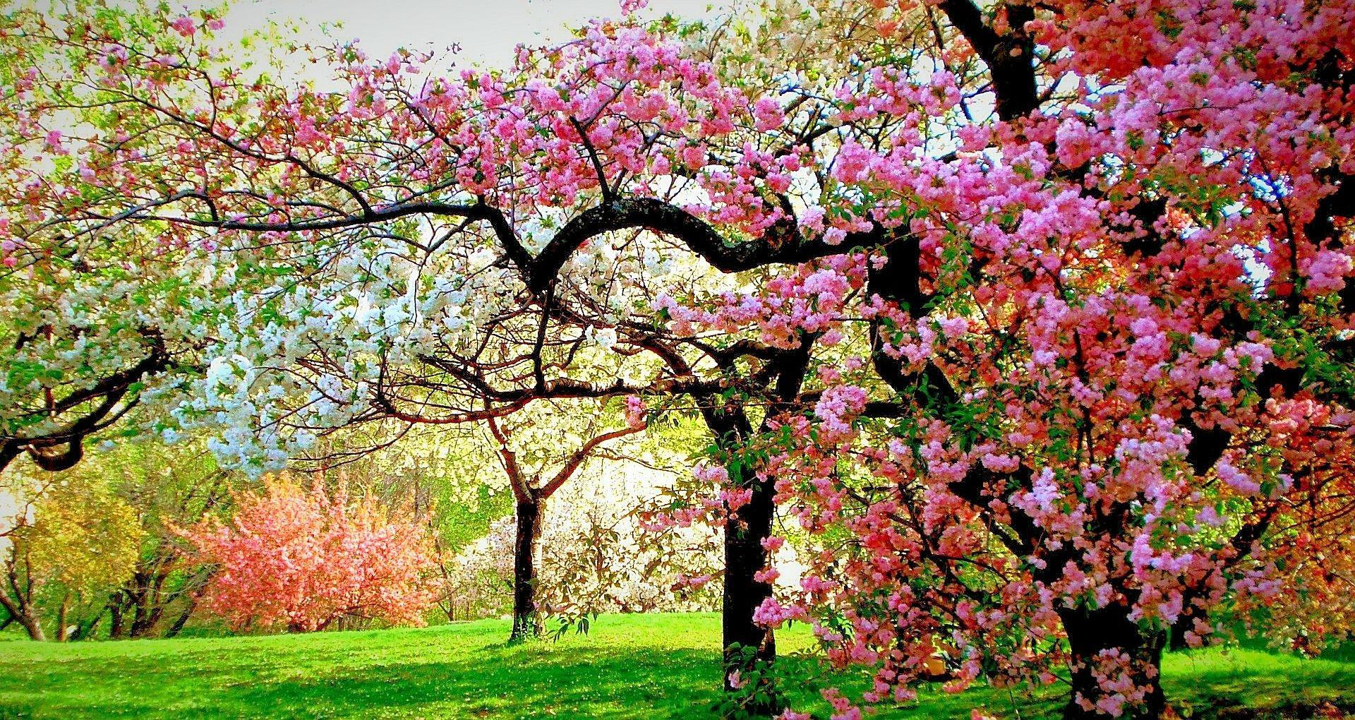 nature wallpaper full hd,tree,flower,plant,spring,blossom