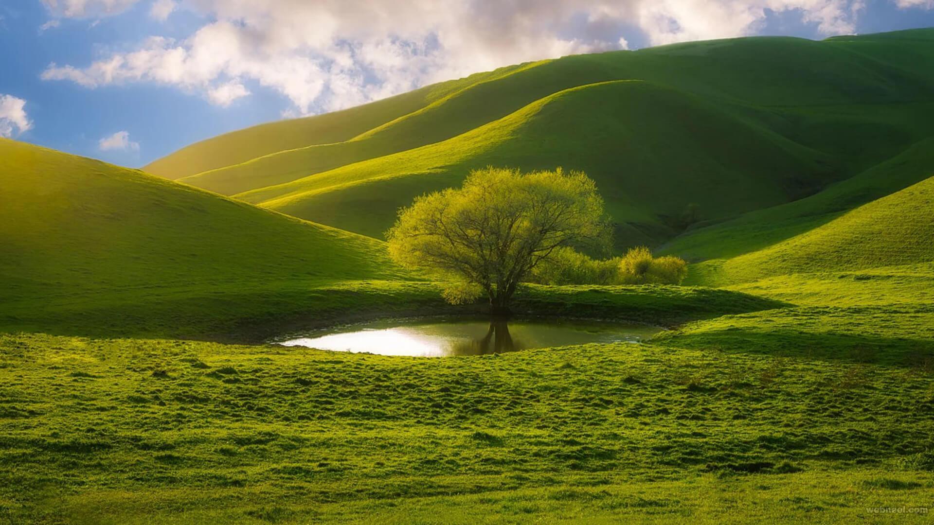 nature wallpaper full hd,green,natural landscape,nature,grassland,highland
