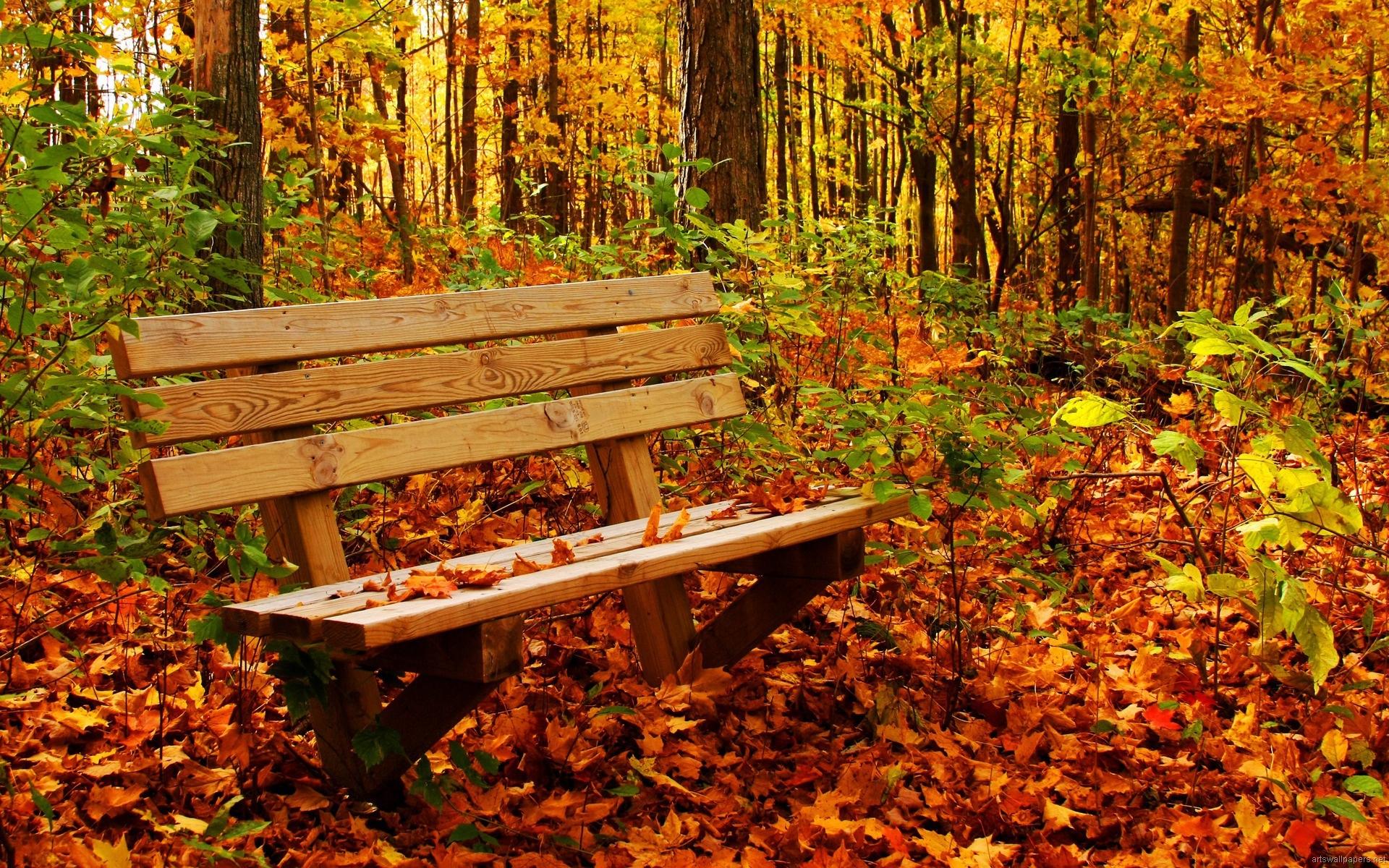 nature wallpaper full hd,natural landscape,nature,deciduous,bench,leaf