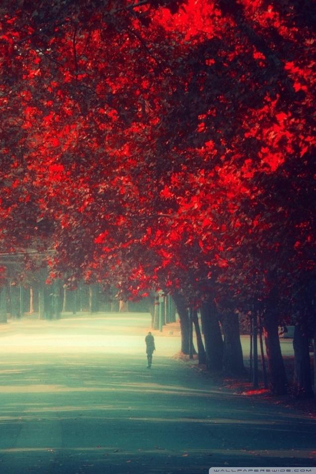 alone wallpaper,red,tree,sky,atmospheric phenomenon,leaf