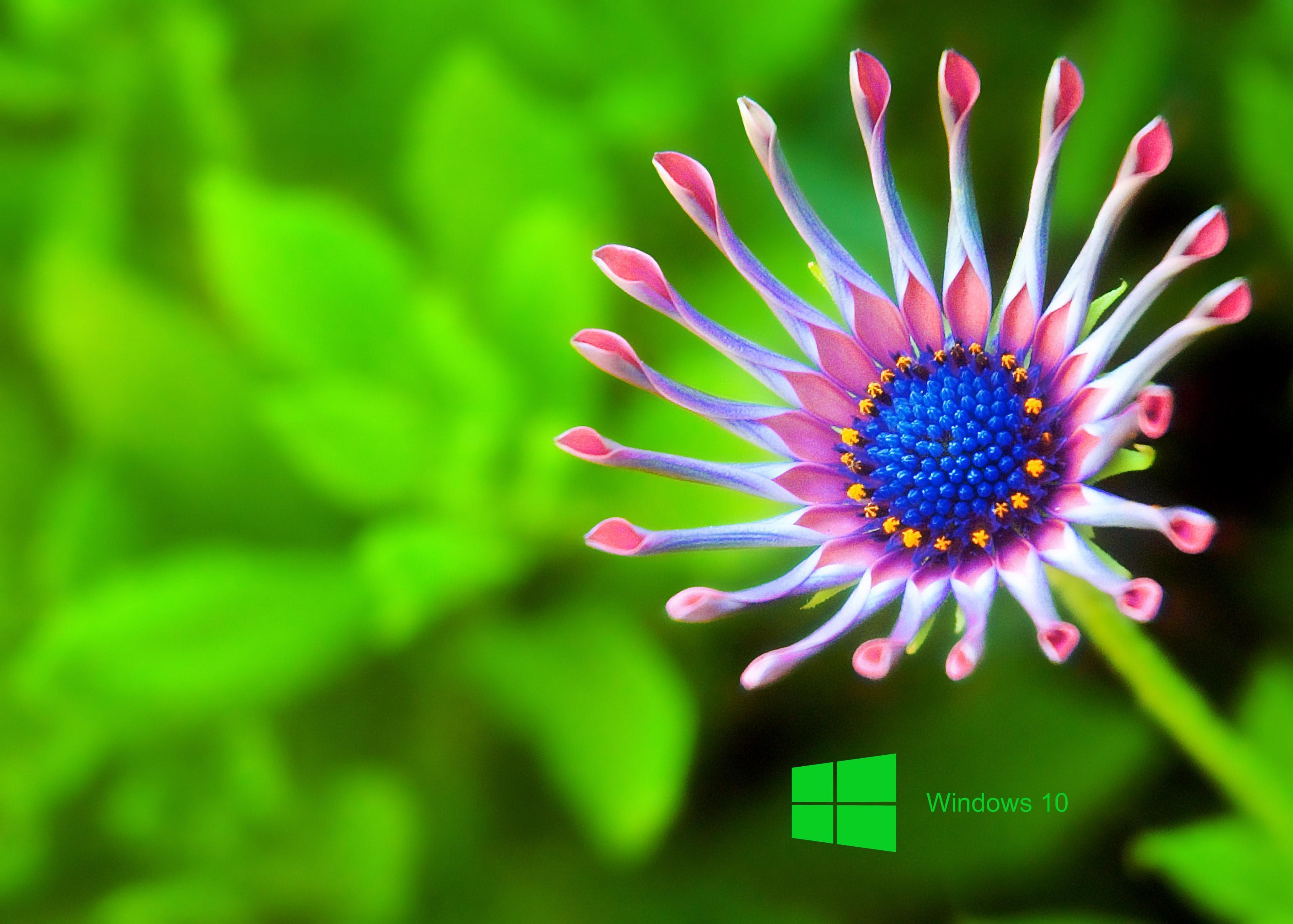 windows 10 wallpaper hd,green,flower,close up,petal,plant