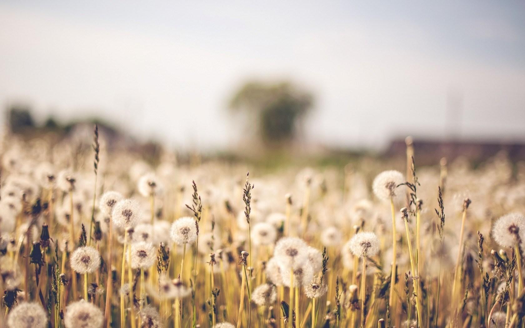 desktop wallpaper tumblr,nature,natural landscape,field,grass,sky