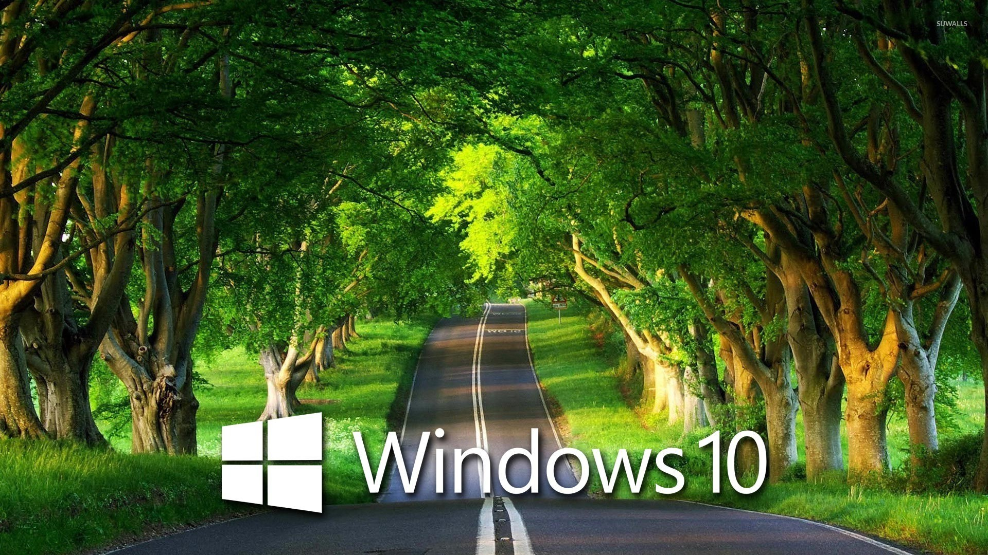 hd wallpapers for windows 10 1920x1080,natural landscape,nature,green,tree,natural environment