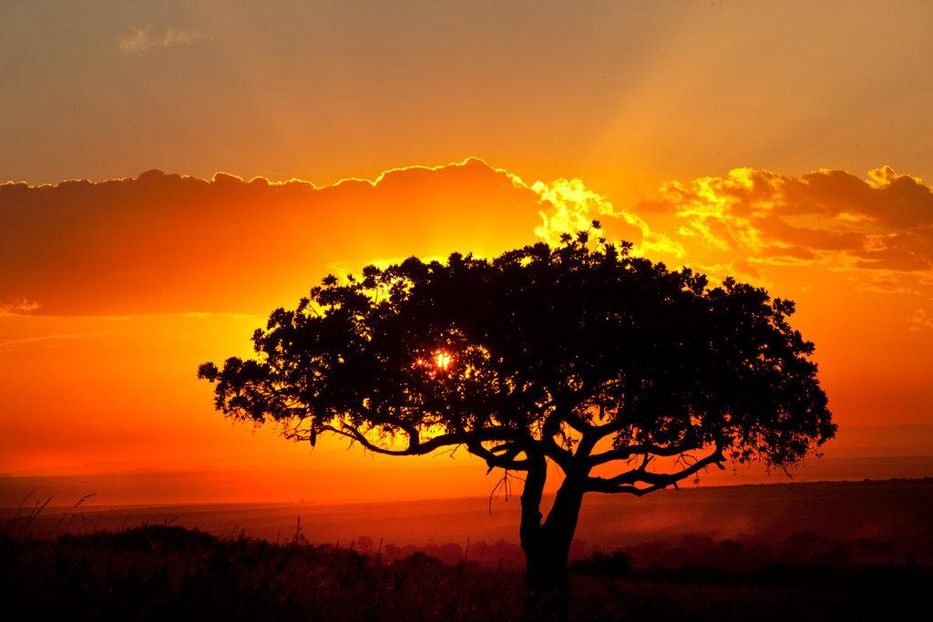 africa wallpaper hd,sky,natural landscape,nature,tree,sunset