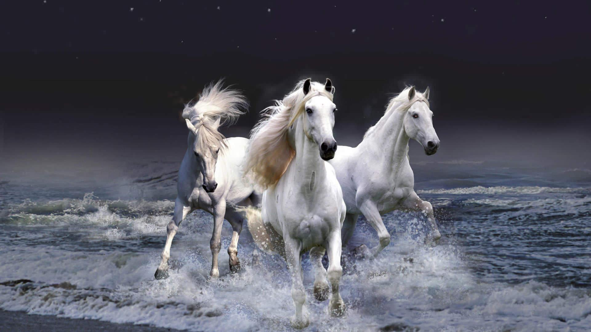 beautiful white wallpaper,horse,mammal,mane,stallion,mustang horse