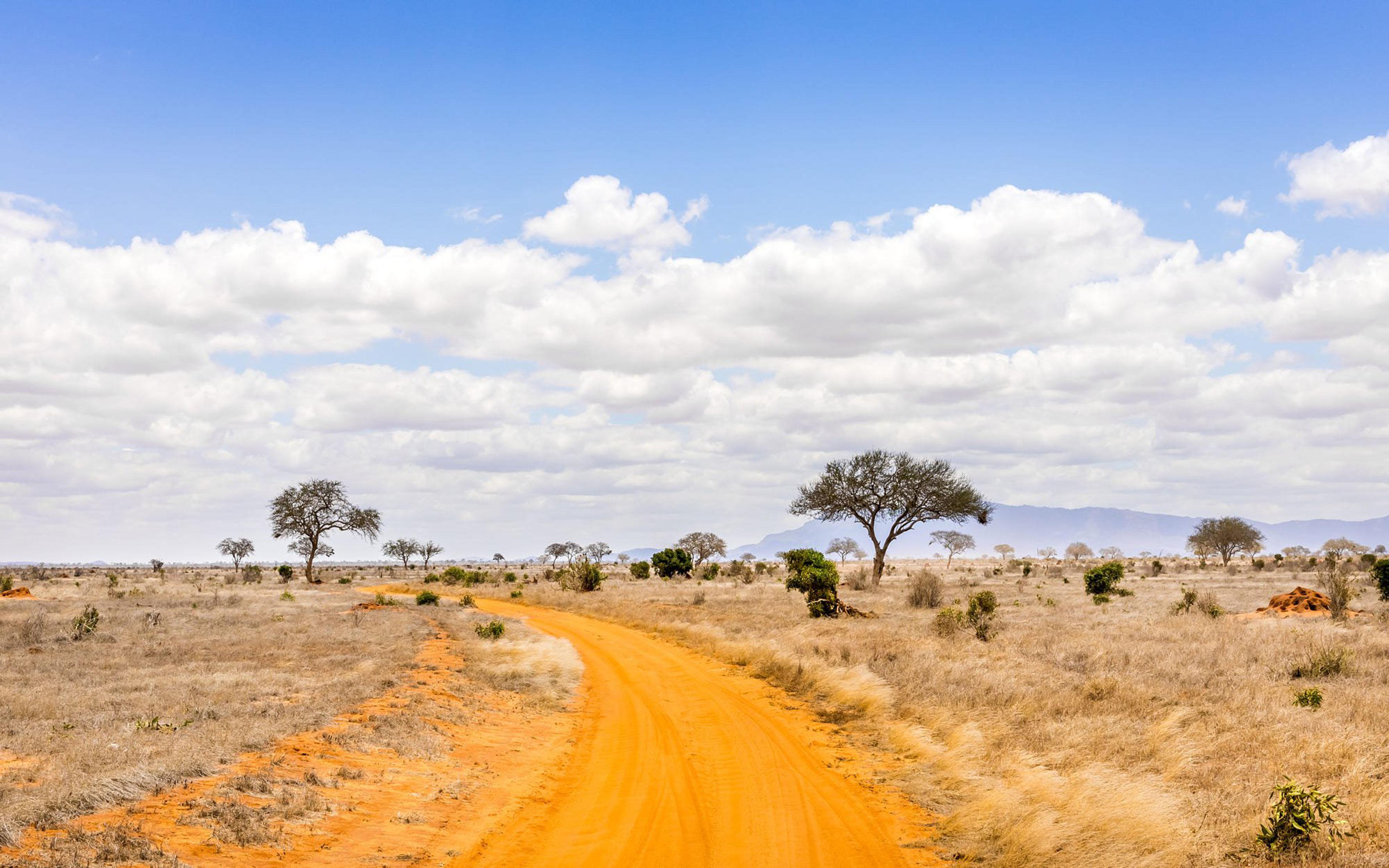 4k ultra hd wallpapers,dirt road,savanna,road,natural environment,vegetation