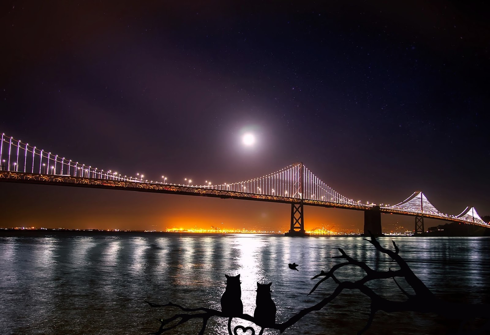 san francisco wallpaper hd,bridge,sky,night,water,cable stayed bridge