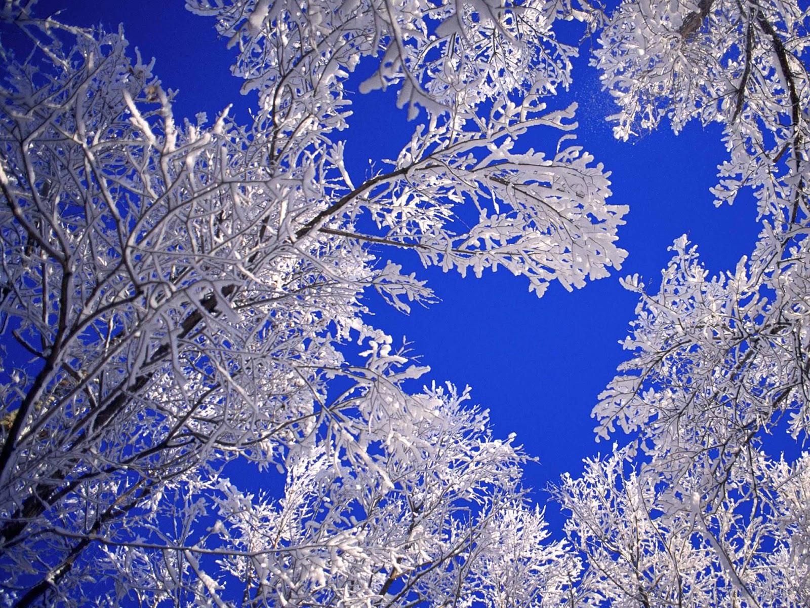 winter computer wallpaper,blue,frost,winter,freezing,branch
