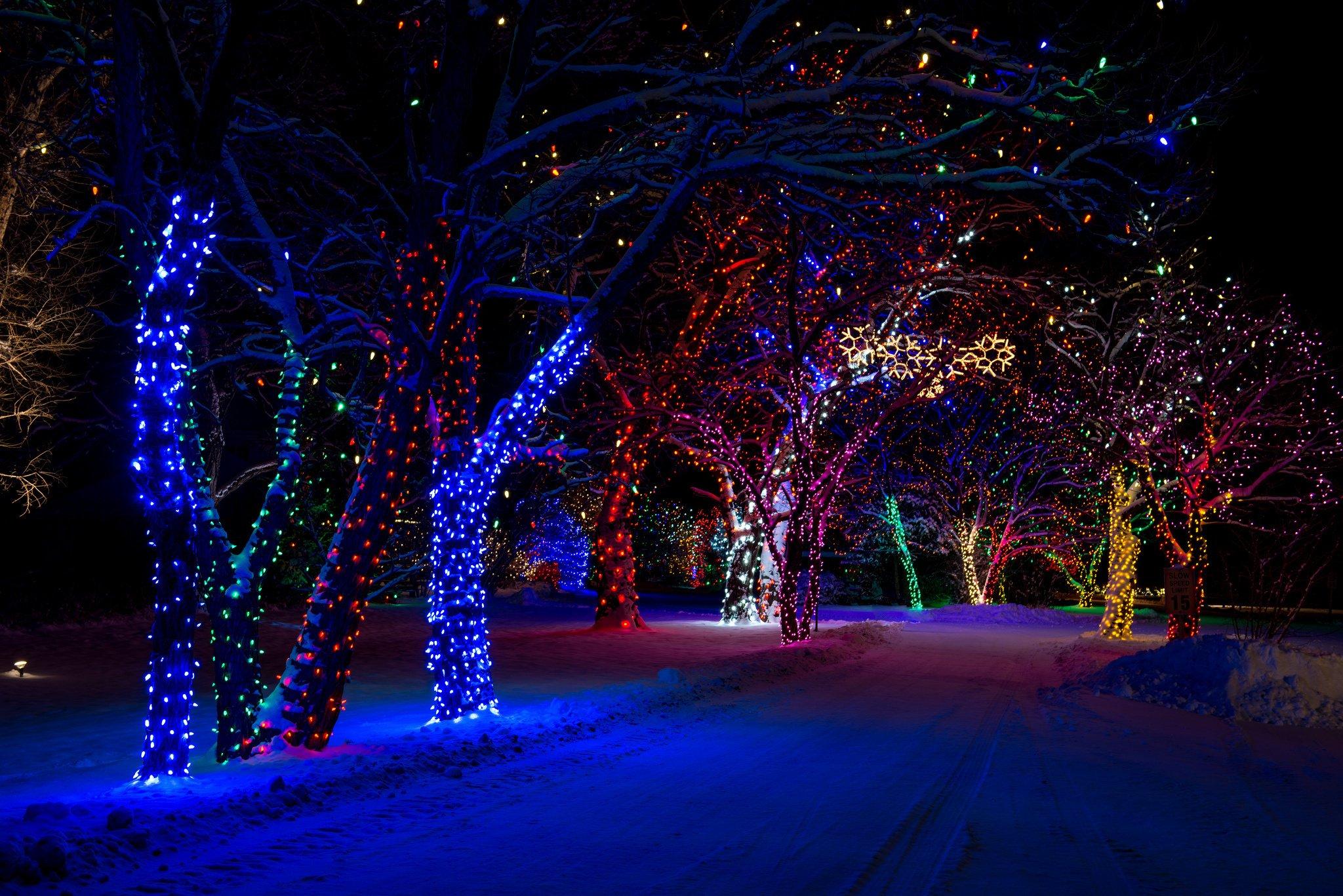 christmas night wallpaper,blue,nature,tree,light,lighting