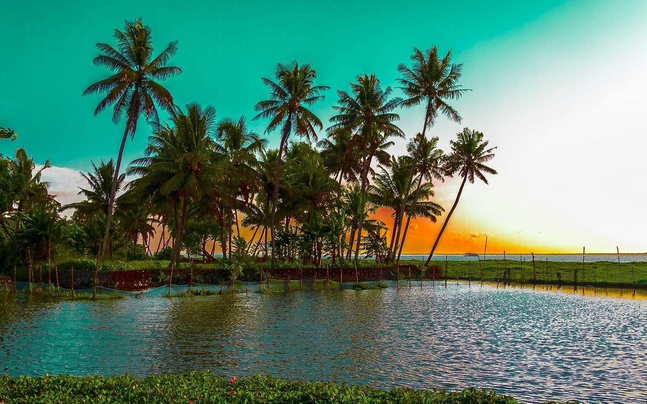 beautiful beautiful wallpaper,nature,tree,natural landscape,palm tree,sky