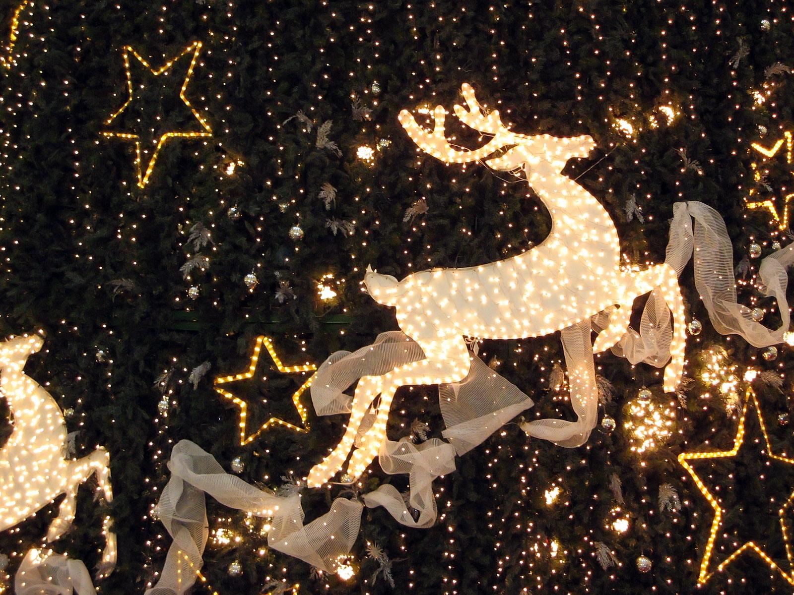 christmas wallpaper hd,reindeer,deer,christmas lights,christmas decoration,christmas ornament