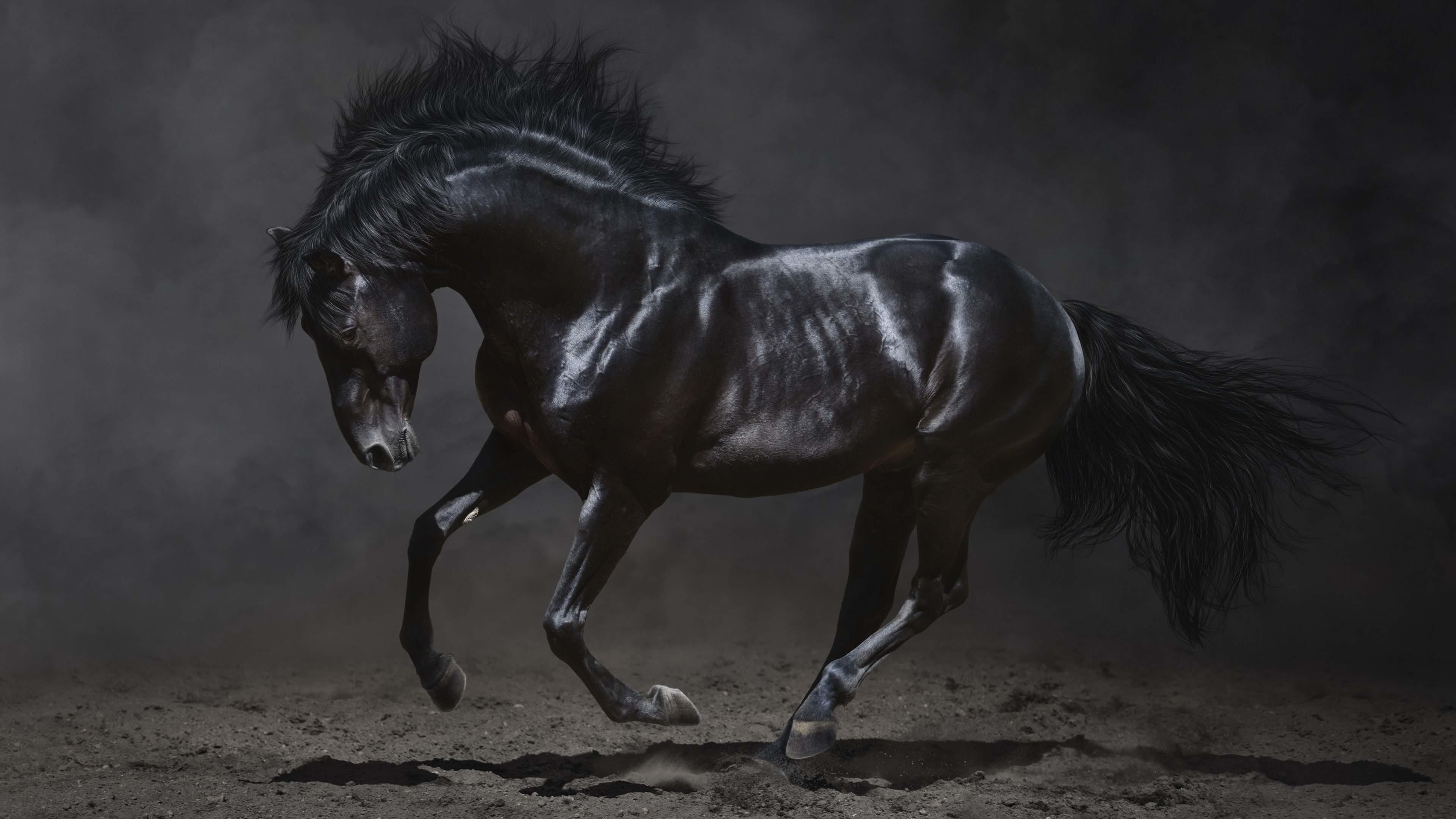dark horse wallpaper,horse,mammal,vertebrate,stallion,mane