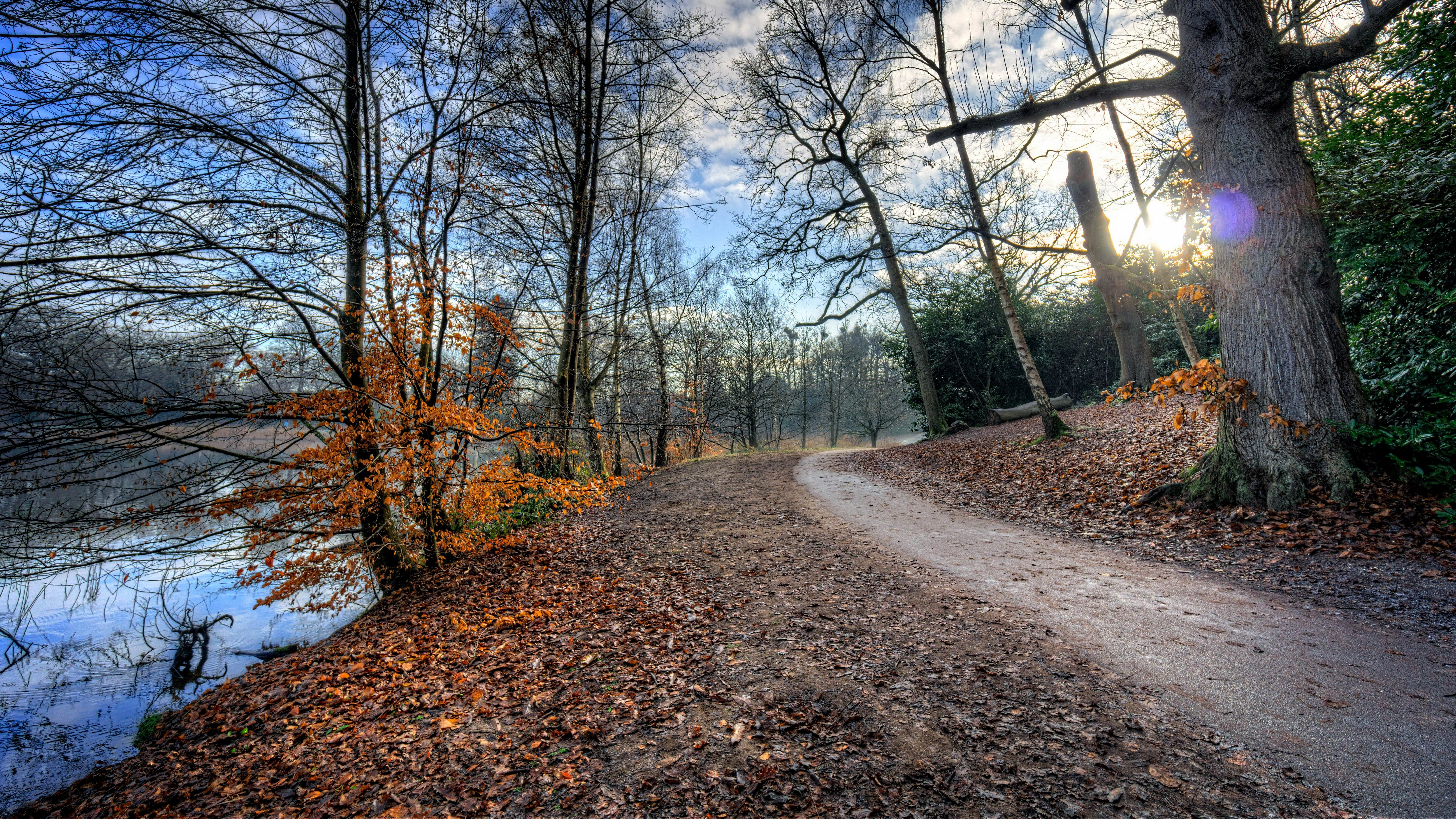 ultra hd wallpapers 8k 7680x4320 nature,natural landscape,tree,nature,woodland,trail