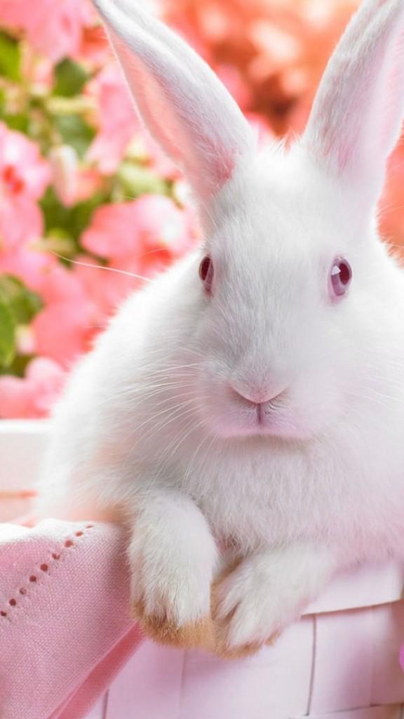 wallpaper for mens phone,rabbit,rabbits and hares,domestic rabbit,skin,pink