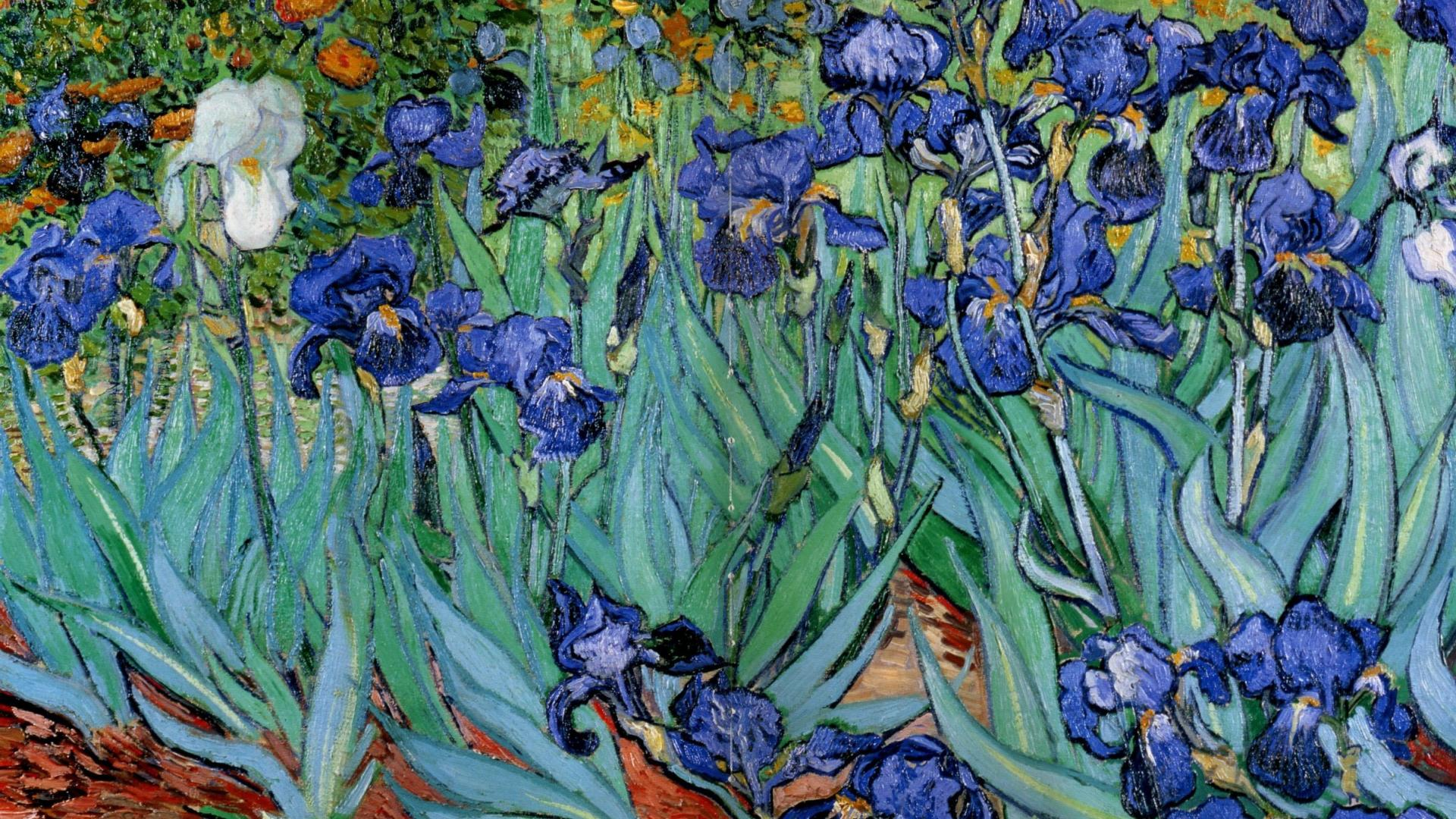 van gogh paintings wallpaper,flower,plant,flowering plant,iris,iris family