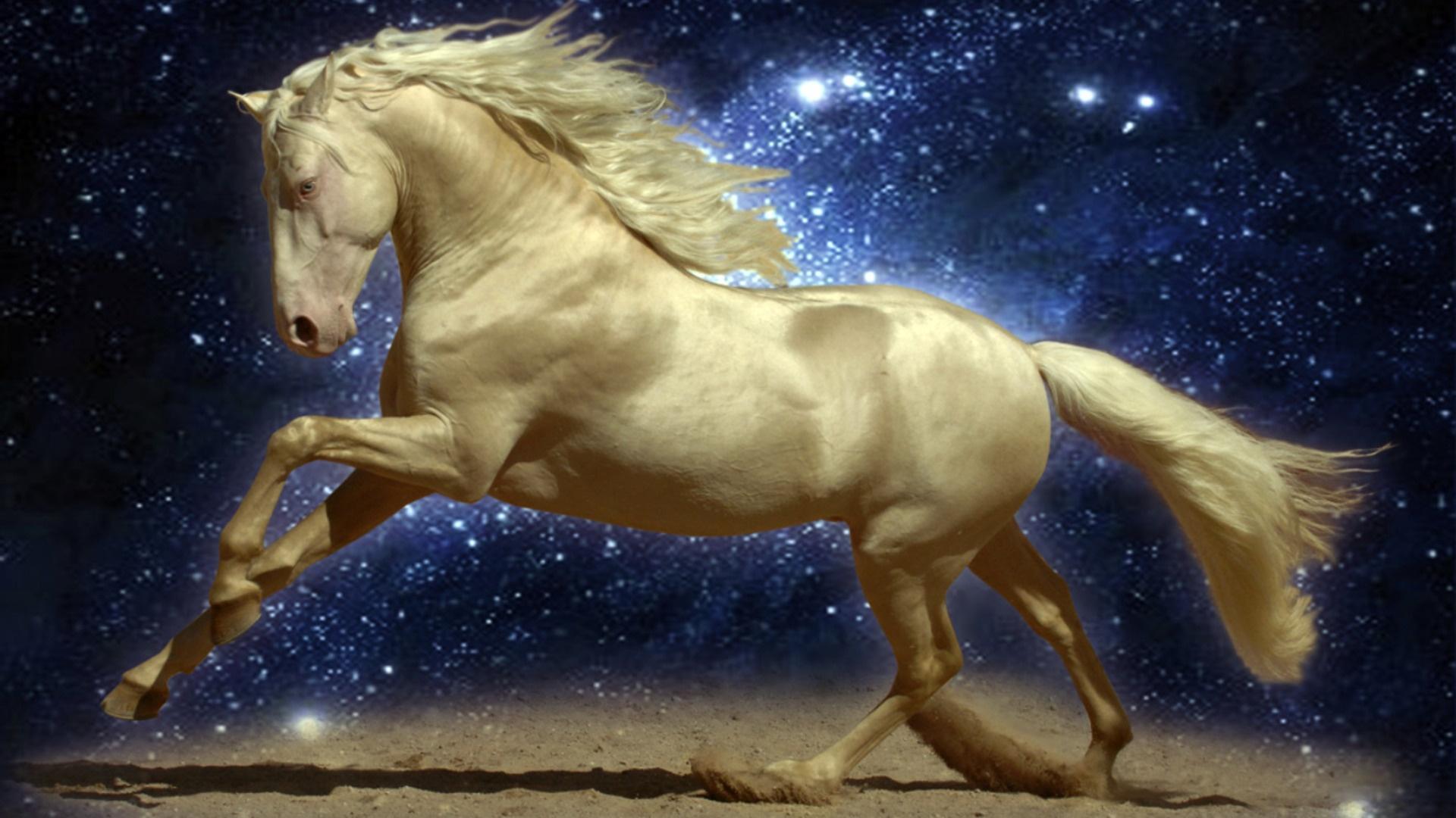 3d horse wallpaper,horse,sky,stallion,mane,organism